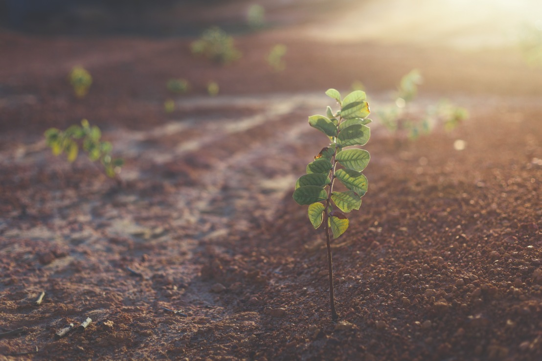 The Parable of the Sower: Part 2 – The RockyGround
